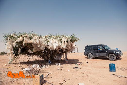 עץ השקיות המסתורי