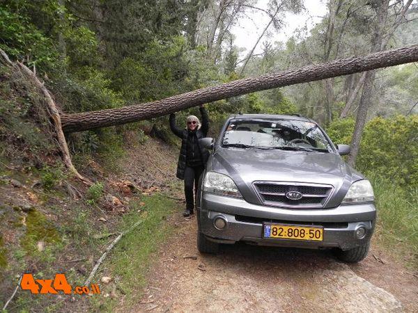 כמעט דרך סגורה בגלל עץ שכרס