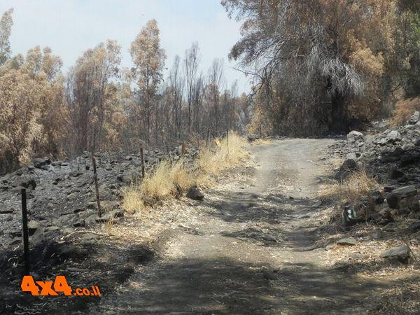 שבועיים לפני הטיול שרפה פקדה את שמורת נחל ג'ילבון. נראה עצוב