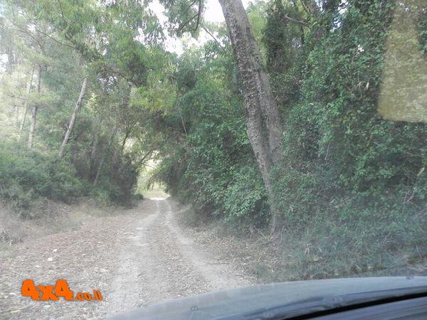 יוצאים דרך יער מגידו המקסים
