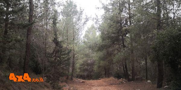 סיבוב ביער הקדושים