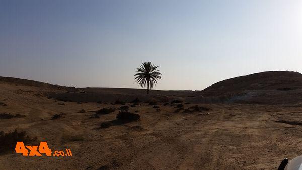 עץ דקל מדהים בלב המדבר