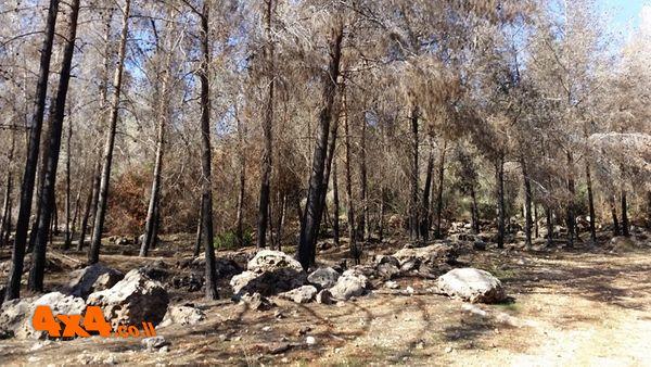 מחזה עצוב של יער שנשרף
