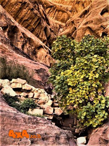 קטע מסלול שני - צומח במדבר