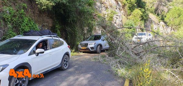 האחד העצים שקרס במעלה יער הקדושים