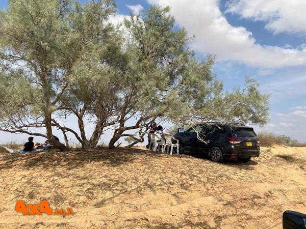 קפסולות של רכב בודד עד שלושה מתחת עצי השיטה לארוחת בוקר