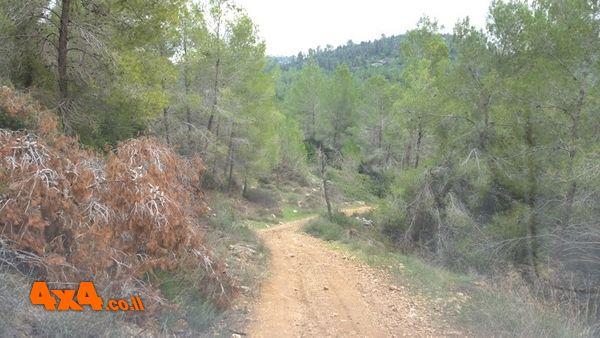 דרך יפה בלב היער