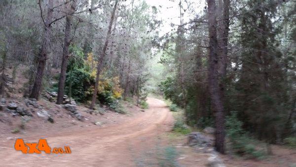 מטפסים עליה ביער הקדושים