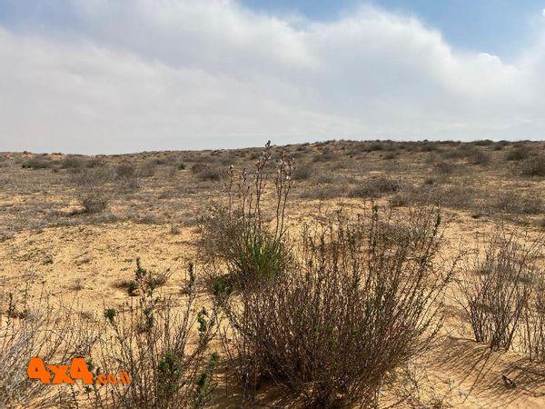 חצבים במדבר המערבי