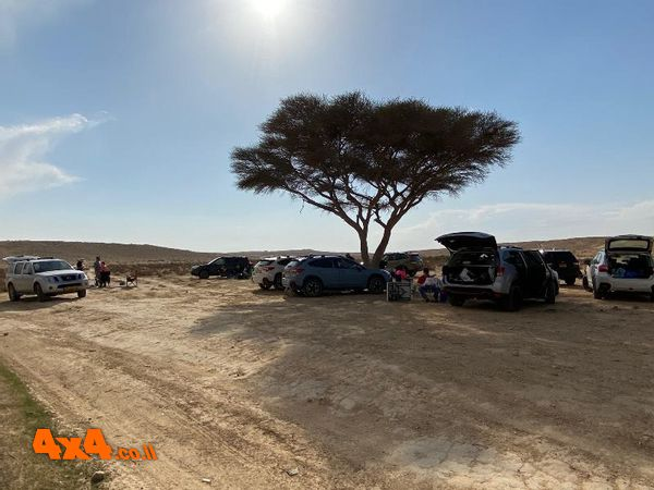ארוחת צהרים מסורתית בטיולי המדבר המערבי תחת עץ השיטה הגדול