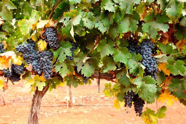 יין רקנאטי ספיישל רזרב אדום 2017