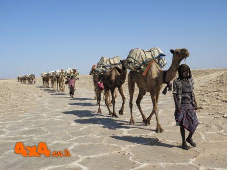 אתיופיה - מדבר דנקיל והר הגעש ארטה-אלה