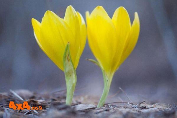 טיול ג'יפים באמצע השבוע בגליל - יום שני, 3/12/18
