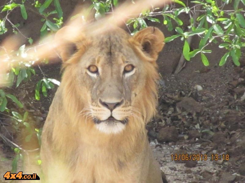 פורום: ספארי בטנזניה