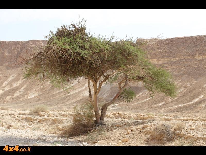 עד כאן 50 ק''מ של מסלול טיול בדרכי המדבר
