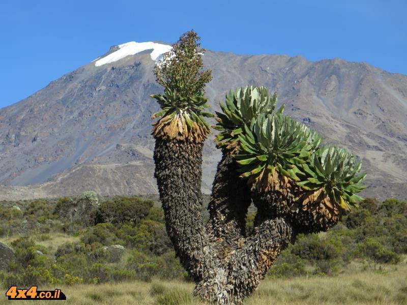 צמחים ופרחים על ההר: