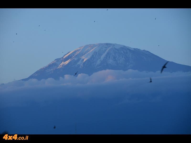 הקילימנג'ארו מציץ מעל העננים (מבט מהעיירה מושי)