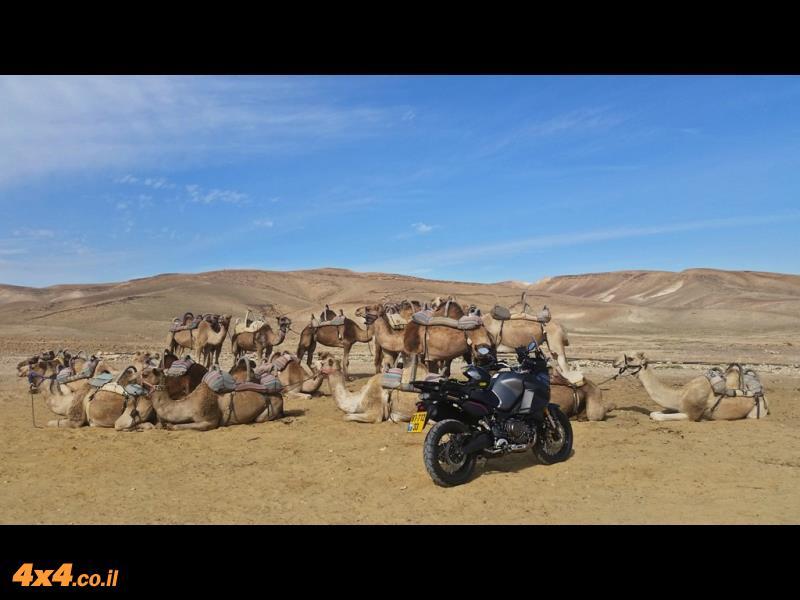 הגמלים של חאן הנוקדים ולידם גמל - אופנוע קצת חזק יותר...