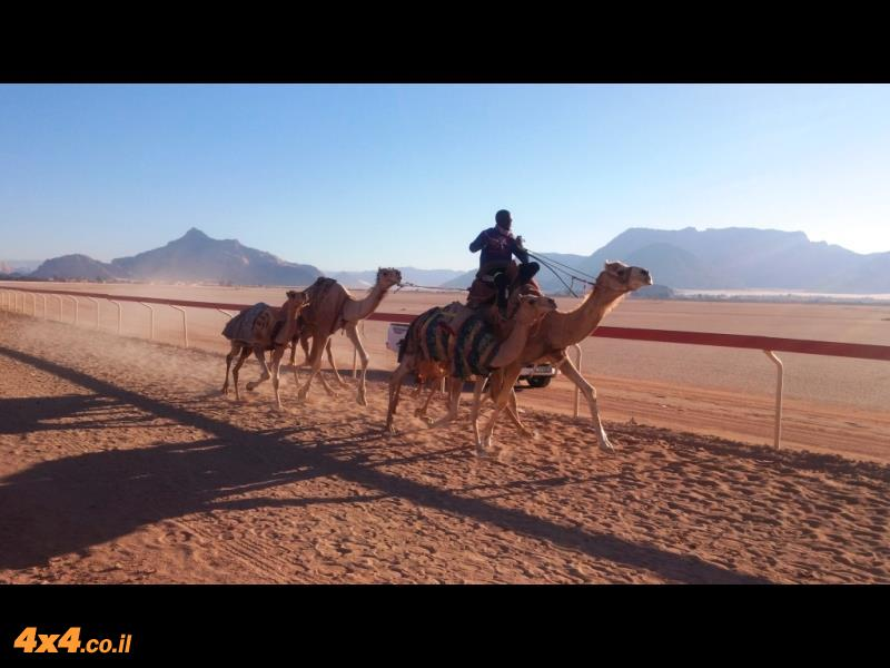 אימון של גמלים בכפר די סי הסמוך לואדי ראם