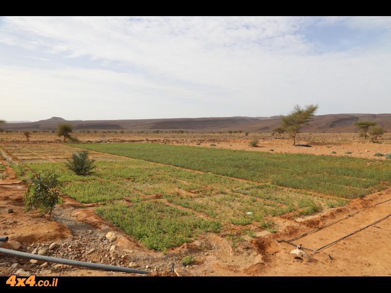 דרכים טרשיות מזכירות את הציחור לצד שדות פורחים ממים הנשאבים מבארות עבודת יד