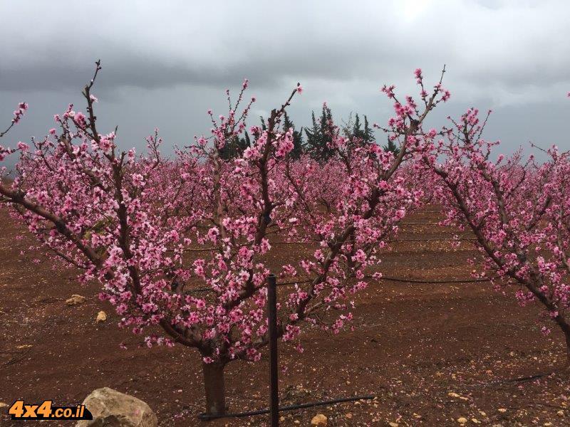 תמונות מהטיול בין תל חי לבירייה לכבוד י''א באדר