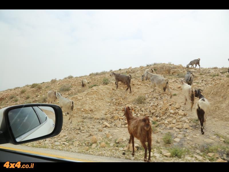 מזראטי בדרך אלון - תמונות מתוך טיול לקוחות: