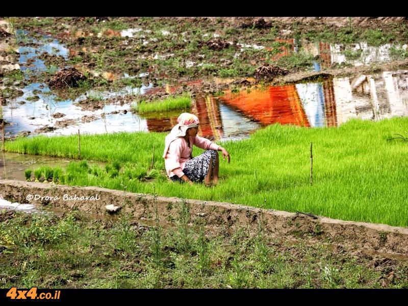 שדות האורז של נפאל בדרך לקטמנדו