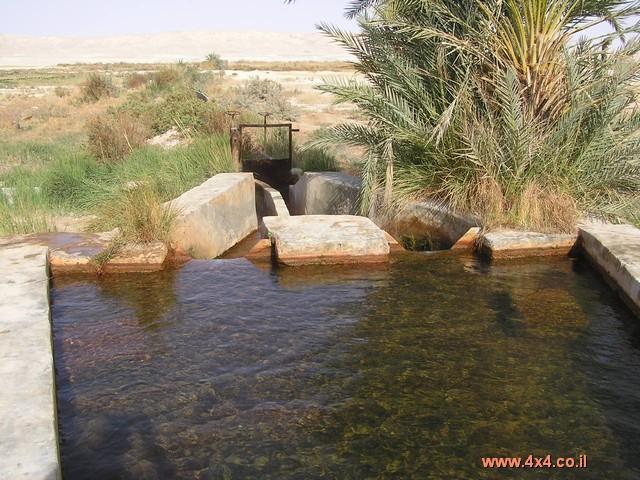 נאת המדבר פארה פארה