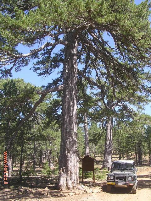 עצים בני מאות שנים