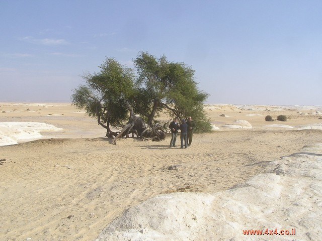 רשמים מהמדבר - רשמה חנה יוליש: