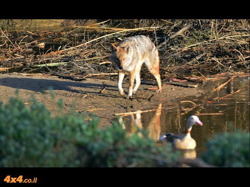 תמונות שצילם בני בייקר בנחל הירקון