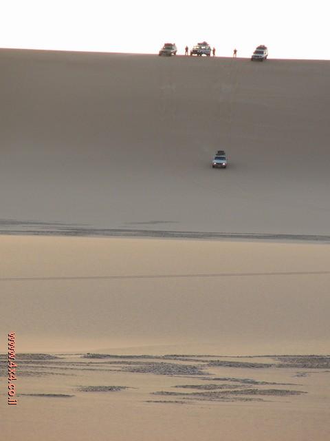 נאת המדבר - פארפרה