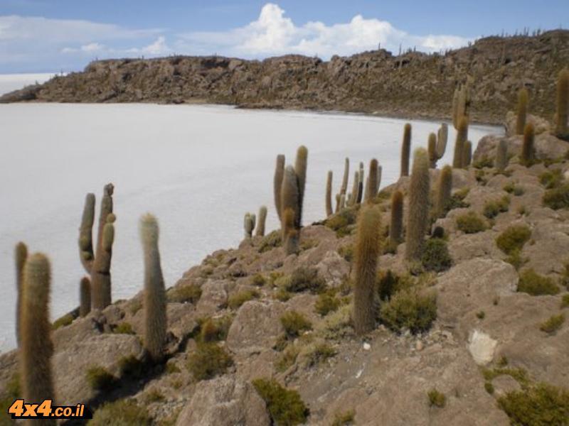 אי הקקטוסים Isla de Pescados