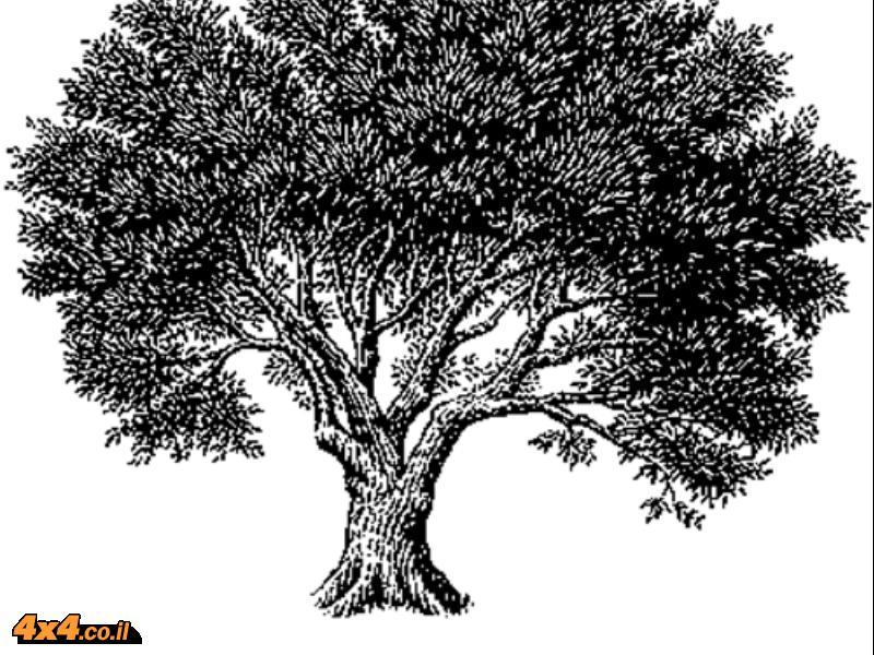 שמן זית בתנ''ך
