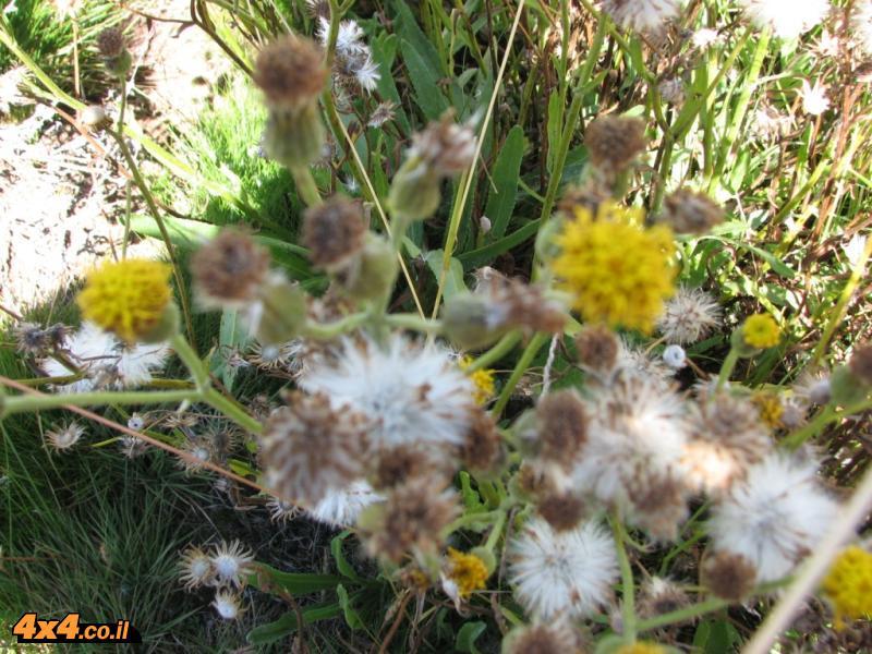 הפרחים שמעל היער הטרופי ומתחת למדבר האלפיני