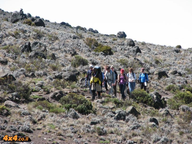 המדבר האלפיני בדרך לקיבו