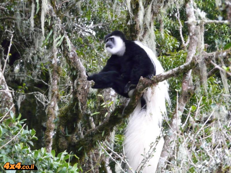 בירידה זכינו לספארי קופים