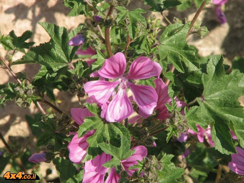 תמונות הפרחים של זאביק