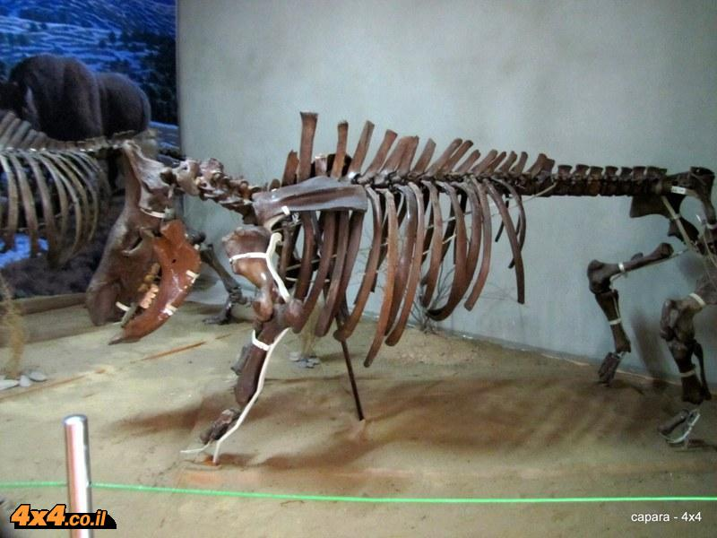 מוזיאון הטבע והדינוזאורים של מונגוליה