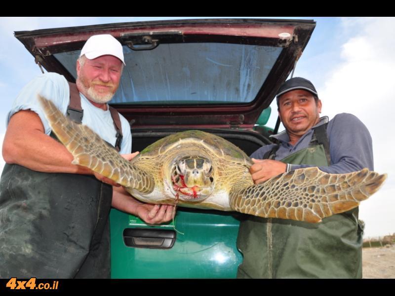 מצילים את צבי הים