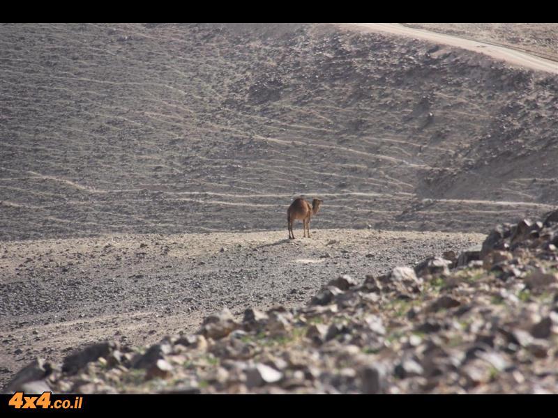 תצפית הר יהל וציר הגז