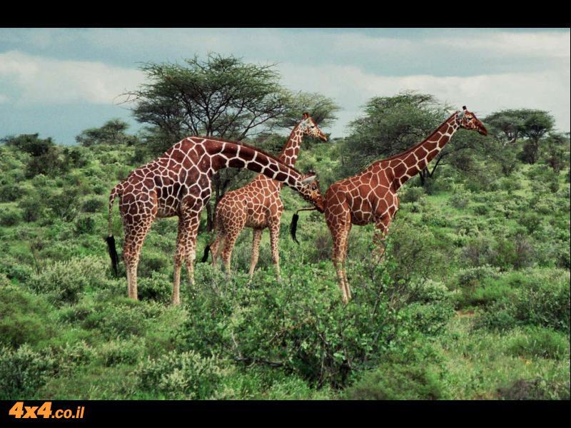 הרהורים על אפריקה שלי