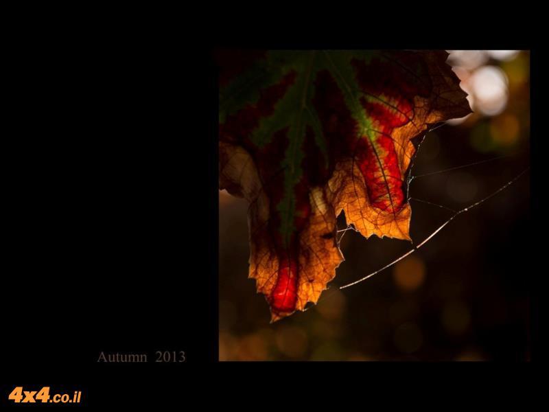 התמונות המדהימות של בני הניגאל מהכרמים של לכיש: