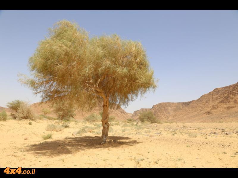 מהשבילים המהירים של ואדי ראם לעבר רמת המדבר