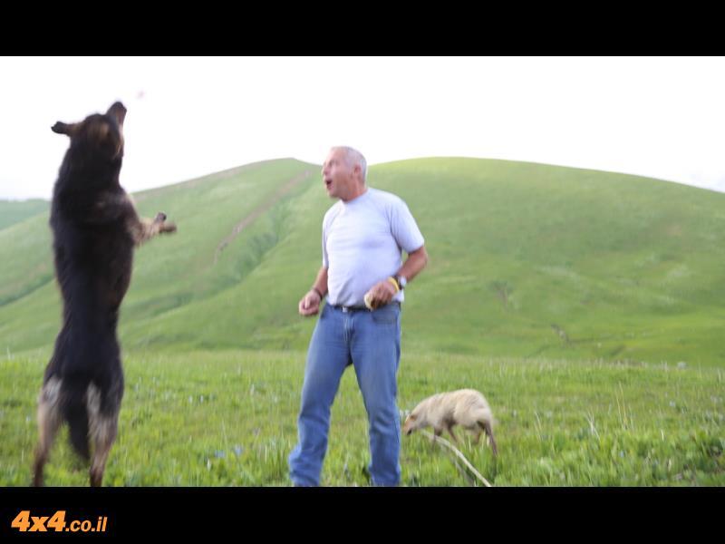 עמי והדב - כלב
